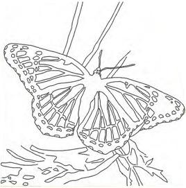 Bastidor Bocetado 30x 30 Mariposa